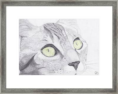 Green Eyed Cat Framed Print by David Smith