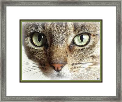 Green Eyed Cat Face Framed Print