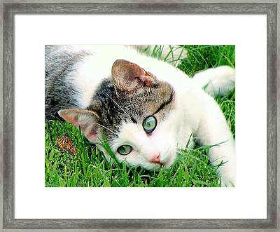 Framed Print featuring the photograph Green Eyed Cat by Janette Boyd
