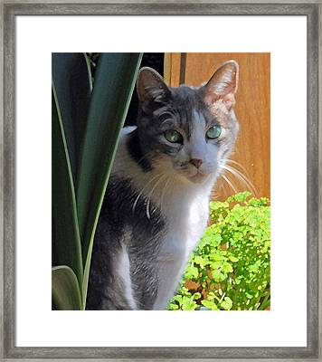 Green Eyed Cat Framed Print