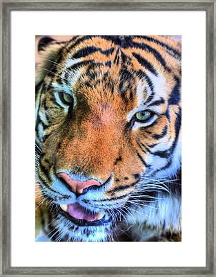 Green Eyed Redhead Framed Print by JC Findley