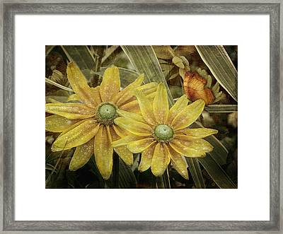 Framed Print featuring the photograph Green Eyed Susie by Barbara Orenya