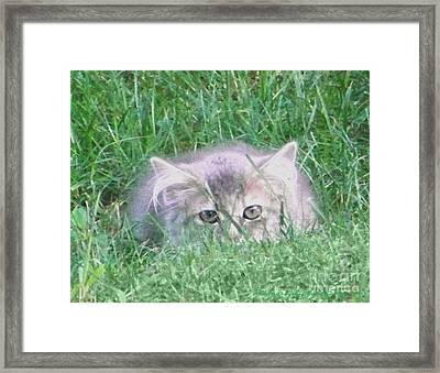 Framed Print featuring the photograph Green Eyes by Gena Weiser