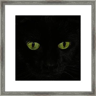 Green Eyes Framed Print by Gothicrow Images