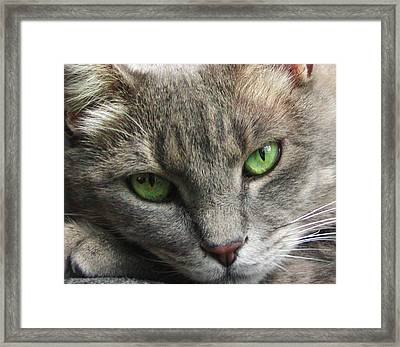 Framed Print featuring the photograph Green Eyes by Leigh Anne Meeks