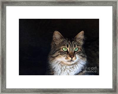 Green Eyes Framed Print by Stelios Kleanthous
