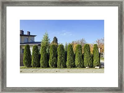 Green Fence Of Trees  Framed Print by Aleksandr Volkov