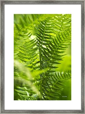 Green Fern Art Framed Print by Christina Rollo