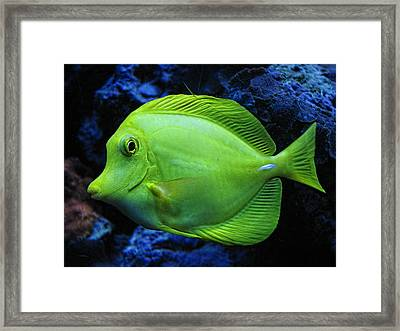 Green Fish Framed Print by Wendy J St Christopher