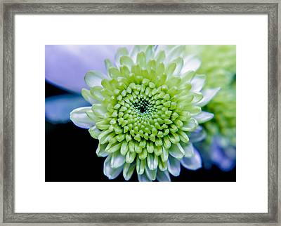 Green Flower Framed Print by Amr Miqdadi