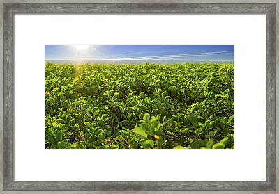 Green Flower Bed Framed Print by Aged Pixel