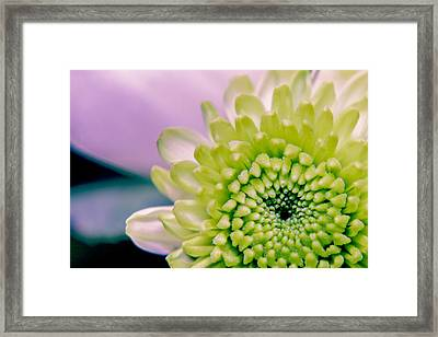 Green Flower2 Framed Print by Amr Miqdadi