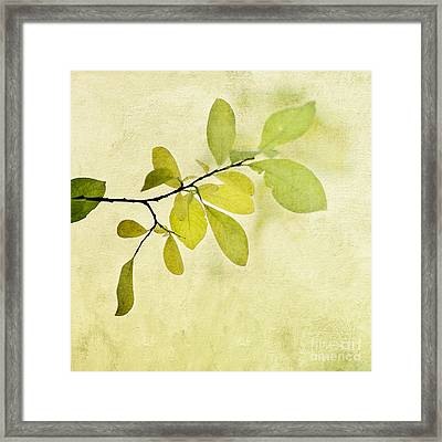 Green Foliage Series Framed Print by Priska Wettstein