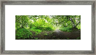 Green Forest Framed Print