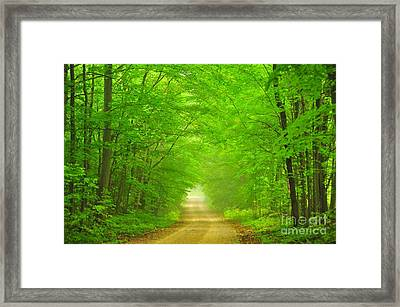 Green Forest Tunnel Framed Print by Terri Gostola