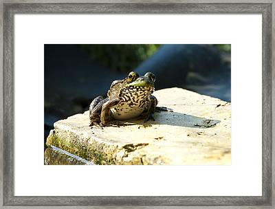 Green Frog - Lookin At Yah Framed Print by Janice Adomeit