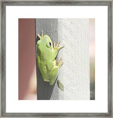 Green Froggy Framed Print by Cathy Lindsey