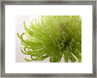 Green Fuji Mum Framed Print