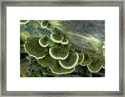 Framed Print featuring the photograph Green Fun Guys by Larry Bishop