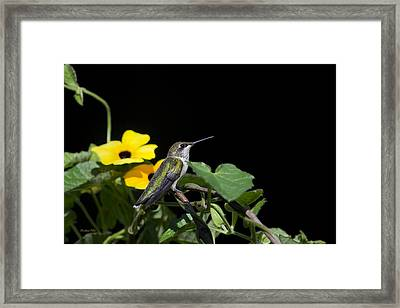 Green Garden Jewel Framed Print by Christina Rollo