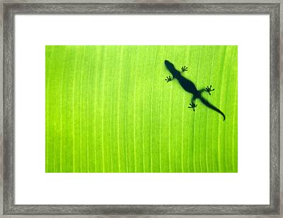 Green Gecko Leaf Framed Print by Sean Davey