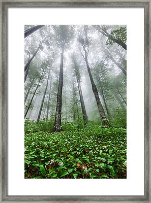 Green Giants Framed Print by Evgeni Dinev