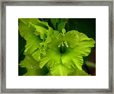 Green Gladiola Flowers Framed Print