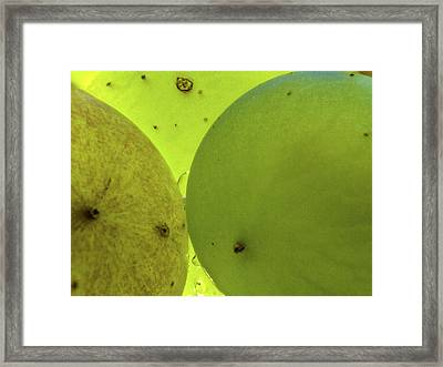 Green Grape Close Up Framed Print