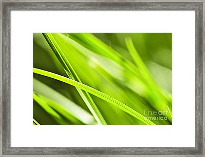 Green Grass Abstract Framed Print by Elena Elisseeva