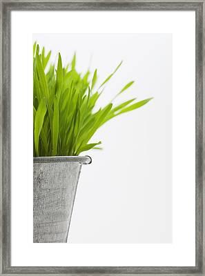 Green Grass In A Pot Framed Print