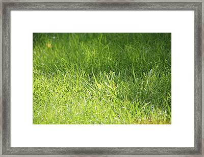 Green Grass Framed Print