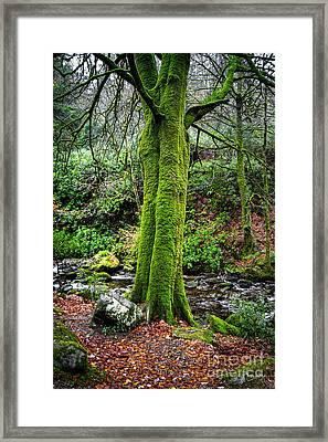 Green Green Moss Framed Print