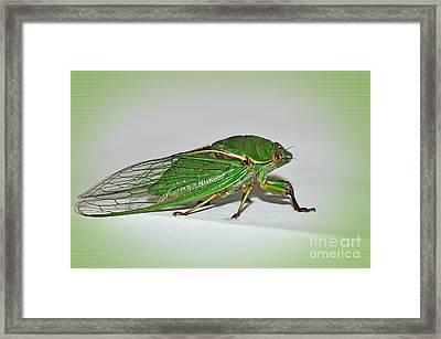 Green Grocer Cicada Framed Print by Kaye Menner