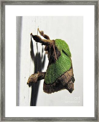 Green Hair Moth Framed Print