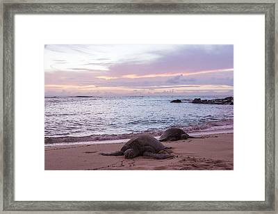 Green Hawaiian Sea Turtles At Sunset - Oahu Hawaii Framed Print by Brian Harig