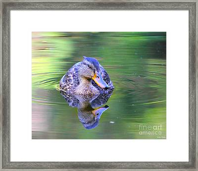 Green-headed Duck At Sunset Framed Print by Jivko Nakev