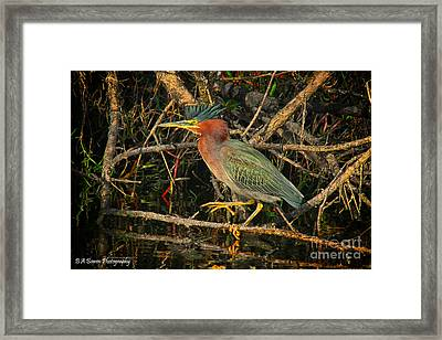 Green Heron Basking In Sunlight Framed Print