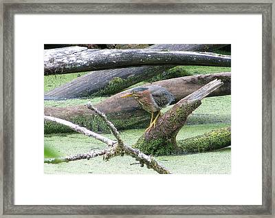 Framed Print featuring the photograph Green Heron - Camouflage by I'ina Van Lawick