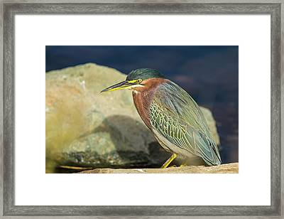 Green Heron In Repose On The Shore Framed Print by Michael Qualls