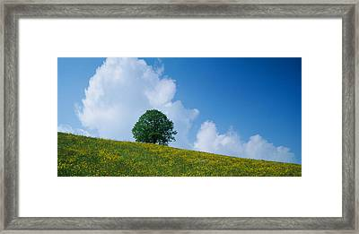 Green Hill W Flowers & Tree Canton Zug Framed Print