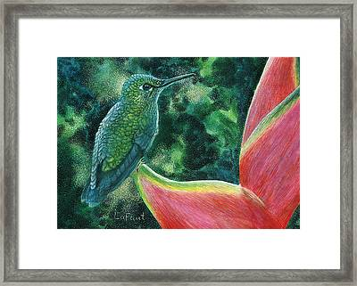 Green Hummingbird Framed Print by Sandra LaFaut
