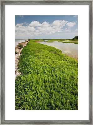 Green Island Sanctuary On The Laguna Framed Print