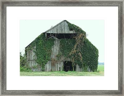 Green Ivy Barn Framed Print by Terry Scrivner