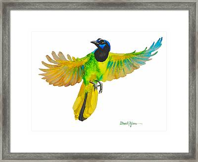 Da175 Green Jay By Daniel Adams Framed Print