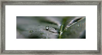 Green Framed Print by Kim Lagerhem