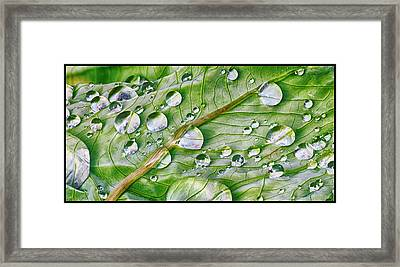 Green Leaf And Rain Drops Framed Print