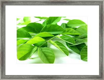 Green Leaf Background Framed Print