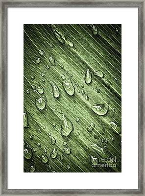Green Leaf Background With Raindrops Framed Print by Elena Elisseeva