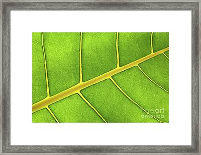 Green Leaf Close Up Framed Print