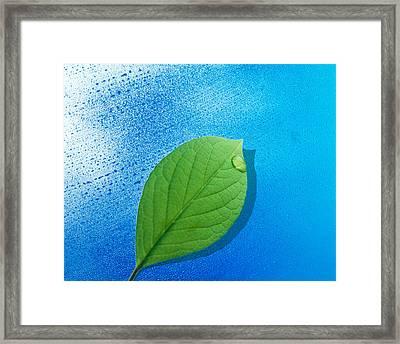 Green Leaf Floating Above Streaked Framed Print